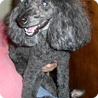 Adopt A Pet :: Shadow - Umatilla, FL