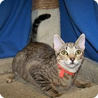 Adopt A Pet :: K-Ls2-Letty - Colorado Springs, CO