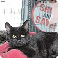 Adopt A Pet :: Scrumptious - Hamilton, ON