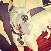 Adopt A Pet :: Adoption Pending ~Aries - Phoenix, AZ