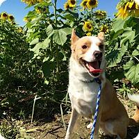 Adopt A Pet :: Rocket - Avon, OH