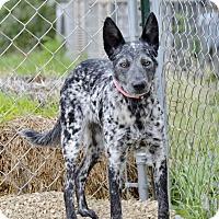 Adopt A Pet :: Jada - Meridian, ID