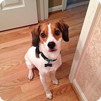 Adopt A Pet :: Cooper - Cedar Rapids, IA