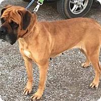 Adopt A Pet :: Lacey - Chambersburg, PA