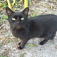 Adopt A Pet :: Sensei - Bonita Springs, FL