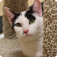Adopt A Pet :: Annie - Richmond, VA