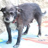 Adopt A Pet :: Havana - Woonsocket, RI