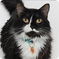 Adopt A Pet :: Draci - San Luis Obispo, CA