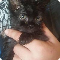 Adopt A Pet :: Sasha - Locust, NC