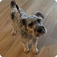 Adopt A Pet :: Wrigley - Redondo Beach, CA