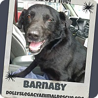 Adopt A Pet :: BARNABY - HOSPICE CARE - Lincoln, NE