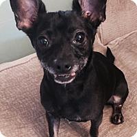 Adopt A Pet :: Radar - Las Vegas, NV