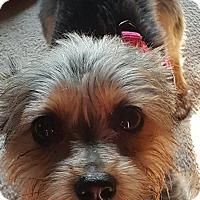 Adopt A Pet :: Peggy - Davison, MI