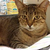 Adopt A Pet :: Tia - Warrenton, MO