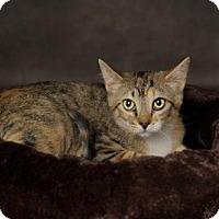 Adopt A Pet :: Chrissy - Salt Lake City, UT