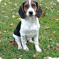 Adopt A Pet :: Gavery - New Oxford, PA