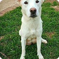 Adopt A Pet :: Winter - Fredericksburg, TX