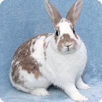 Adopt A Pet :: Douglas - Encinitas, CA