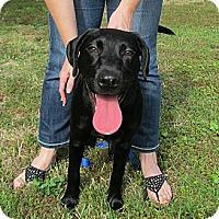 Adopt A Pet :: Apollo - Kingwood, TX