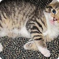 Adopt A Pet :: Cashew - N. Billerica, MA