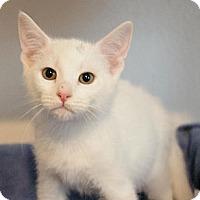 Adopt A Pet :: Kailey - Sacramento, CA