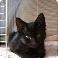 Adopt A Pet :: Stella (2) - Davis, CA