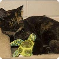 Adopt A Pet :: Lucy - New Port Richey, FL