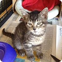 Adopt A Pet :: Thelma - Island Park, NY