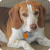 Adopt A Pet :: Daisy - Franklin, VA