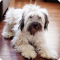 Adopt A Pet :: Thatcher in MO - North Kansas City, MO