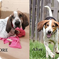 Adopt A Pet :: Cranberry - Hagerstown, MD