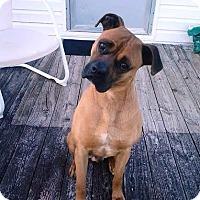 Adopt A Pet :: Sampson-Adopted! - Turnersville, NJ