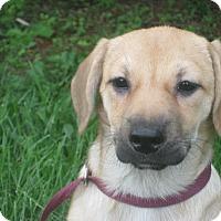 Adopt A Pet :: Akemi - Portland, ME