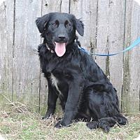 Adopt A Pet :: Galinda - Newcastle, OK