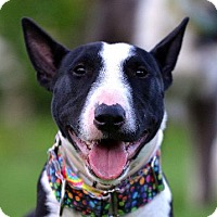 Adopt A Pet :: Covet - Garland, TX