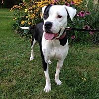 Adopt A Pet :: Amanda - Buffalo, NY