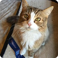 Adopt A Pet :: Cheshire aka Chessy - Absecon, NJ