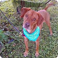 Adopt A Pet :: Cary - Princeton, KY