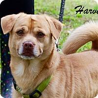 Adopt A Pet :: Harvey - Daleville, AL