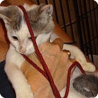 Adopt A Pet :: KITTY CASTLE - LYSH'13 - New York, NY
