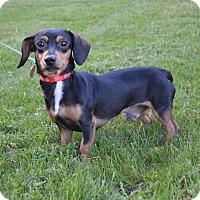 Adopt A Pet :: Blake - New Oxford, PA