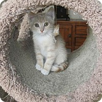 Adopt A Pet :: Marlin - Cincinnati, OH