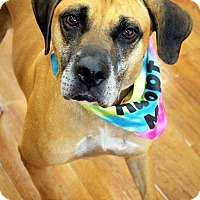 Adopt A Pet :: Buddy - Ft. Lauderdale, FL