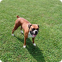 Adopt A Pet :: Sadie - Denver, IN