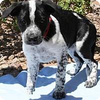 Adopt A Pet :: Lilli - Gilbert, AZ