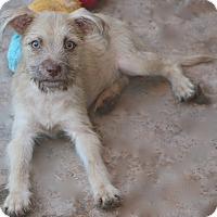 Adopt A Pet :: Tamale - Meet Me - Norwalk, CT