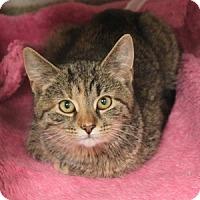 Adopt A Pet :: Amy - Naperville, IL