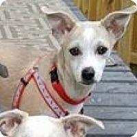 Adopt A Pet :: Fritz - Grafton, WI