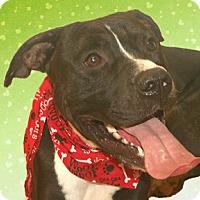 Adopt A Pet :: Hayden - Cincinnati, OH