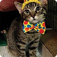 Adopt A Pet :: Berton - East Brunswick, NJ